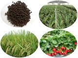 专业生物有机肥供应商,生物有机肥采购