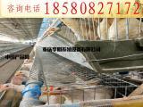 鸡笼 养殖设备  阶梯式蛋鸡笼 层叠式蛋鸡笼 镀锌蛋鸡笼