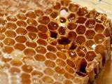 蜂房粉 蜂房提取物 蜂房速溶粉