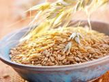 燕麦粉 燕麦生粉 燕麦提取物粉