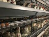 蛋鸡笼价格多少钱一组 大佳蛋鸡笼物超所值