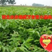 陕西杨凌锦绣万亩果树苗木繁育基地的形象照片