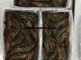 南美白对虾 一手货源 境外工厂现货直供