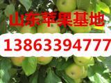 供应红星苹果 红将军苹果产地最新批发价格