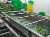 蔬菜清洗风干流水线净菜加工首选设备