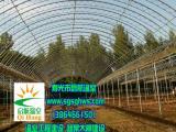 温室大棚   简易连栋拱棚   寿光市启航温室