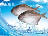 青岛海鲜水产进口报关专业代理公司