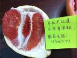 三红柚子苗哪里买|哪家三红蜜柚苗最好-正宗红心柚子苗
