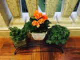 温州家庭庭院室内绿化,小区家庭花园设计美化施工,有机菜园培育