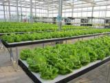 物联网技术在农业生产转型发展中的应用
