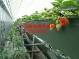 蔬菜种植槽销售