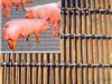 热镀锌钢丝轧花编织猪羊育肥养殖网厂家