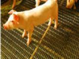 家庭畜牧养殖漏粪网厂家直销