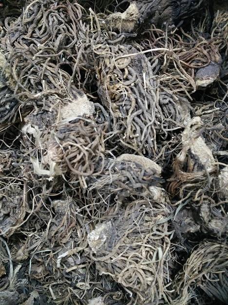 供应黑藜芦提取物