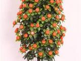 仿真橘子树树叶 树皮 树杆定制厂家 大型仿真桔子树