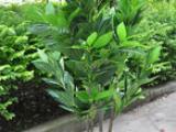 仿真荔枝树制作过程 仿真荔枝树价格