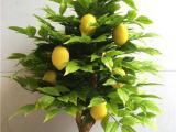 仿真柠檬树桃树批发 柠檬树枝 假果树 仿真柠檬树枝桃树