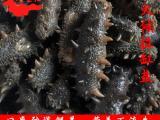 批发拉缸盐辽参 野生海参 中火候 多种规格
