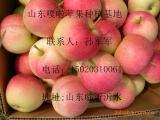 产地红富士苹果2016年批发0.50/斤