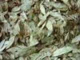 供应番泻叶提取物,猕猴桃提取物,南沙参提取物,绿豆提取物