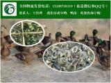 散养翡翠鸭效益高农村正宗翡翠鸭苗新种
