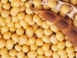 大豆异黄酮60%,40%,20%