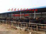 供应中国肉驴网