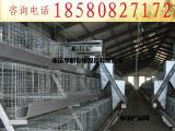 鸡笼 养殖设备 肉鸡笼 阶梯式肉鸡笼 镀锌肉鸡笼 层叠肉鸡笼