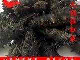 批发拉缸盐辽参 野生海参 小火候 多种规格 涨发2.8-3斤