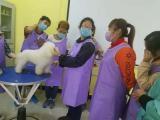 北京学宠物美容宠物美容学校哪家好
