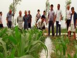 农田灌溉控制系统推荐厂家,源合农田灌溉控制系统厂家及报价?