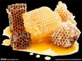 进口蜂蜜报关报检门到门服务