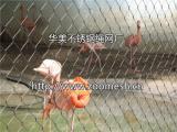 鸟语林网/鸟园围网/鸟园防护网-不锈钢绳网