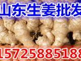 优质生姜产地大量老姜批发价格便宜
