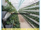 草莓立体种植槽 无土栽培槽 英耐尔制造