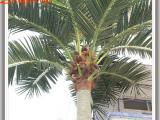 仿真椰子树种类