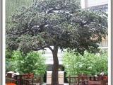 室外假树公司