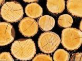 进口木材板材清关流程