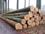 欧洲木材进口手续|原木进口清关流程