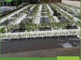 景观水生态治理  1*1生态浮岛填