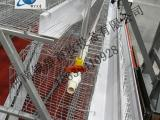 全自动阶梯式鸡笼设备价格丨蛋鸡笼供应公司【银星】