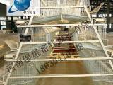 河南全自动阶梯式鸡笼厂家销售丨蛋鸡笼批发规格【银星】