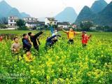 河北省休闲农业与乡村旅游建设发展规划立项申报方案