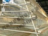 河南全自动阶梯式鸡笼厂家批发丨蛋鸡笼批发售后【银星】