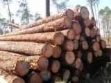 进口木材报关流程