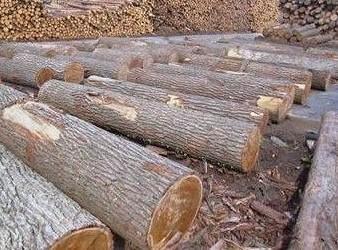 v原木美国原木国际运输费用剩米饭粥图片
