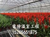 供应阳光板大棚安装 花卉大棚造价 型号齐全