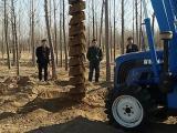 拖拉机改装电线杆挖坑机300 500 504 等多种马力