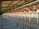 定位栏料线 养猪设备配套  自动化养猪设备