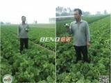 叶菜类蔬菜助生长的肥料